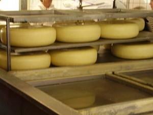 feria quesos