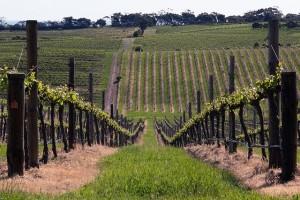 vino y turismo