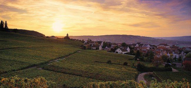 WineStyle Travel sorprende a todo el mundo con su nueva oferta de exclusivos viajes enogastronómicos. Ofrece a todo aquel...